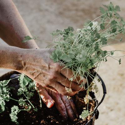 Garden gardening-services-marbella-la-alzambra-angels-property-management